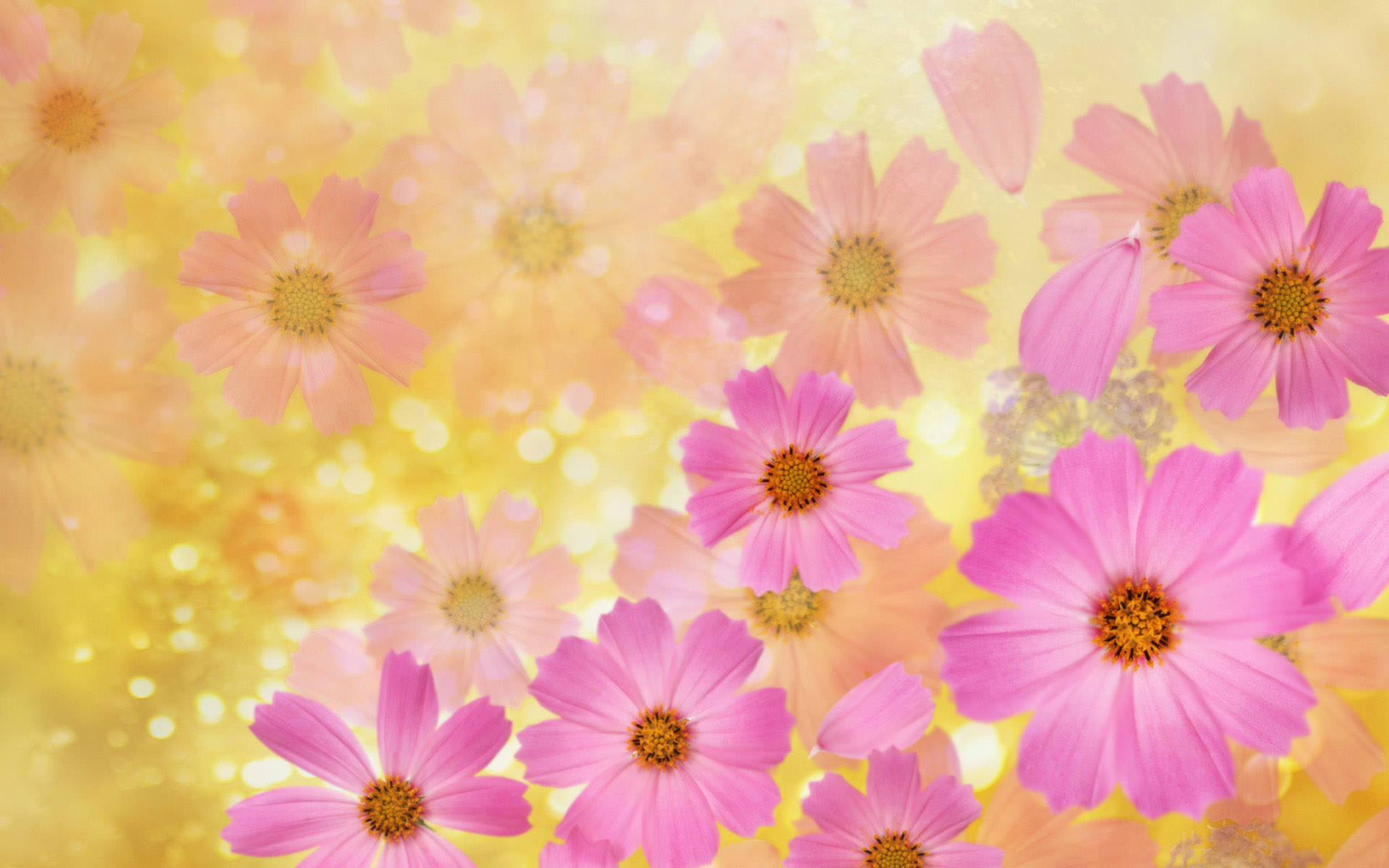 with flowers desktop - photo #27