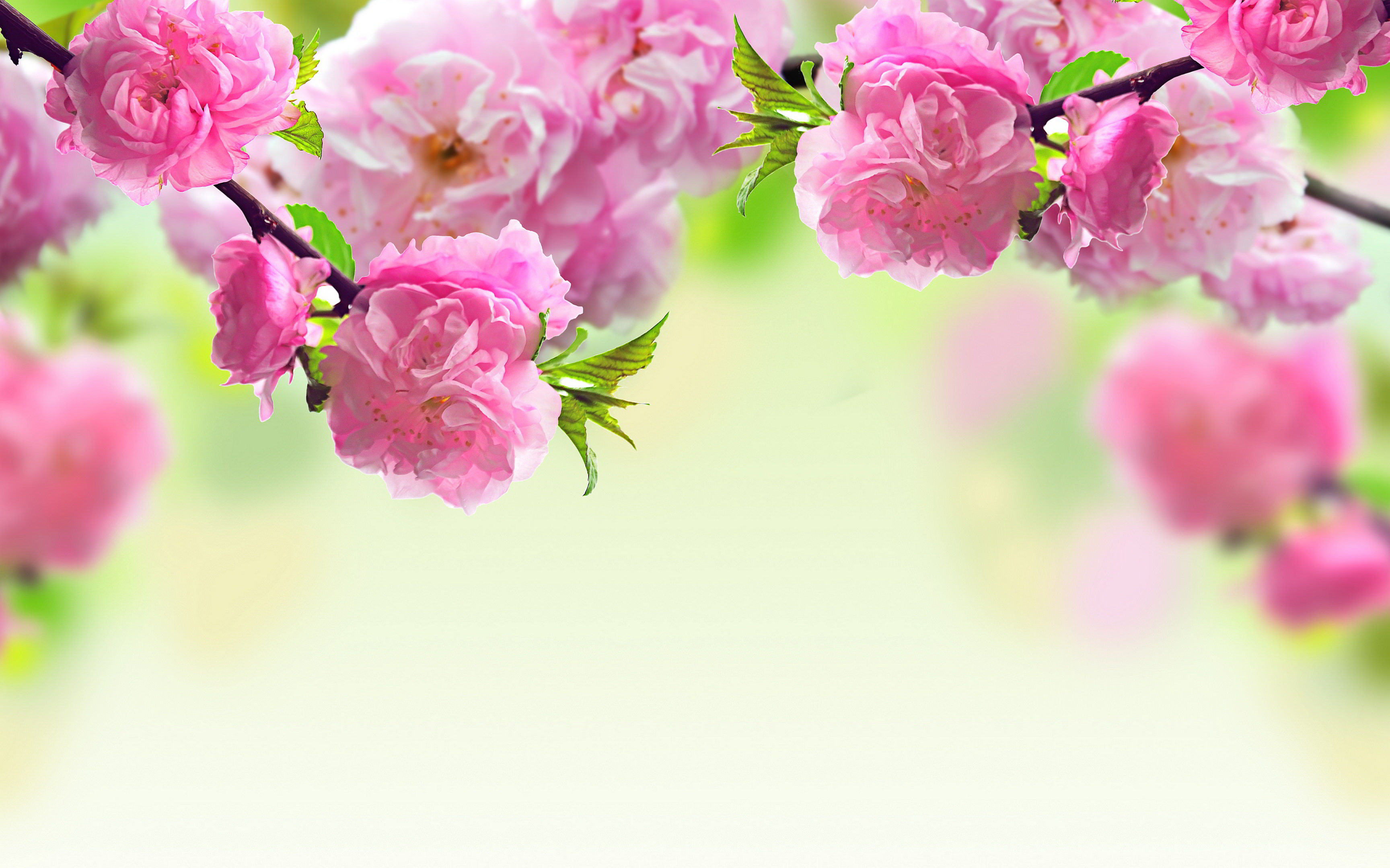 169+ Flower Backgrounds, Wallpapers, Pictures, Images ...