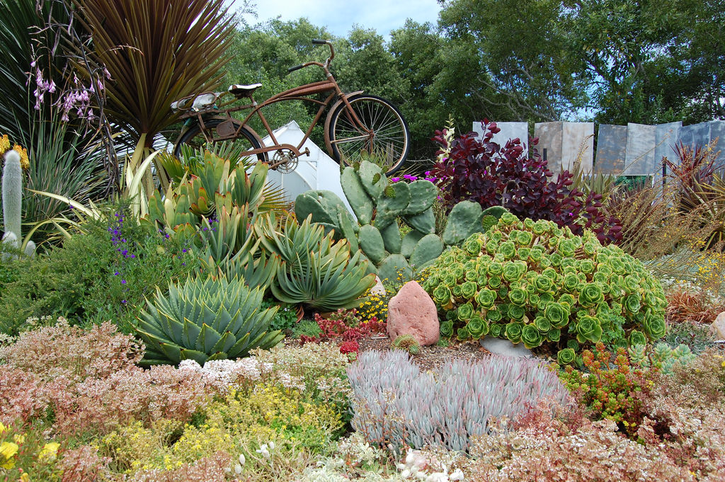 21 succulent garden designs garden designs design trends for Garden design using succulents