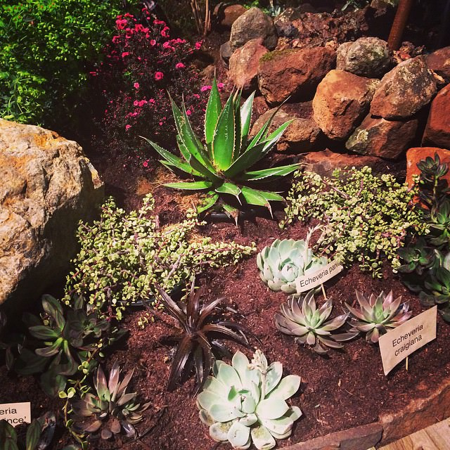 21 succulent garden designs garden designs design trends for Garden design with succulents