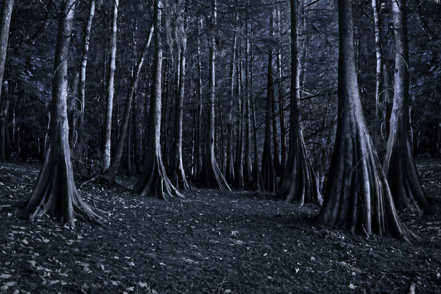28 creepy backgrounds wallpapers images pictures for Creepy trees for halloween