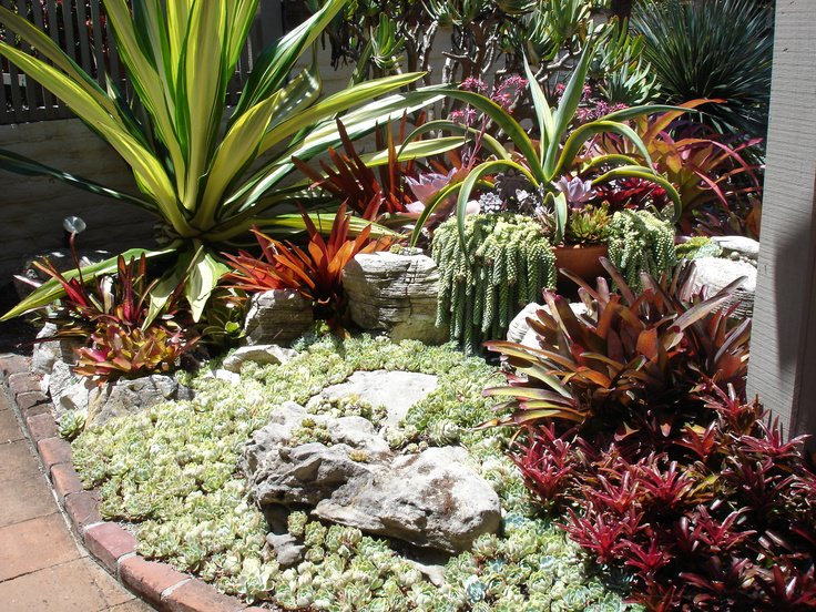 52 succulent garden designs garden designs design trends for Cactus garden designs