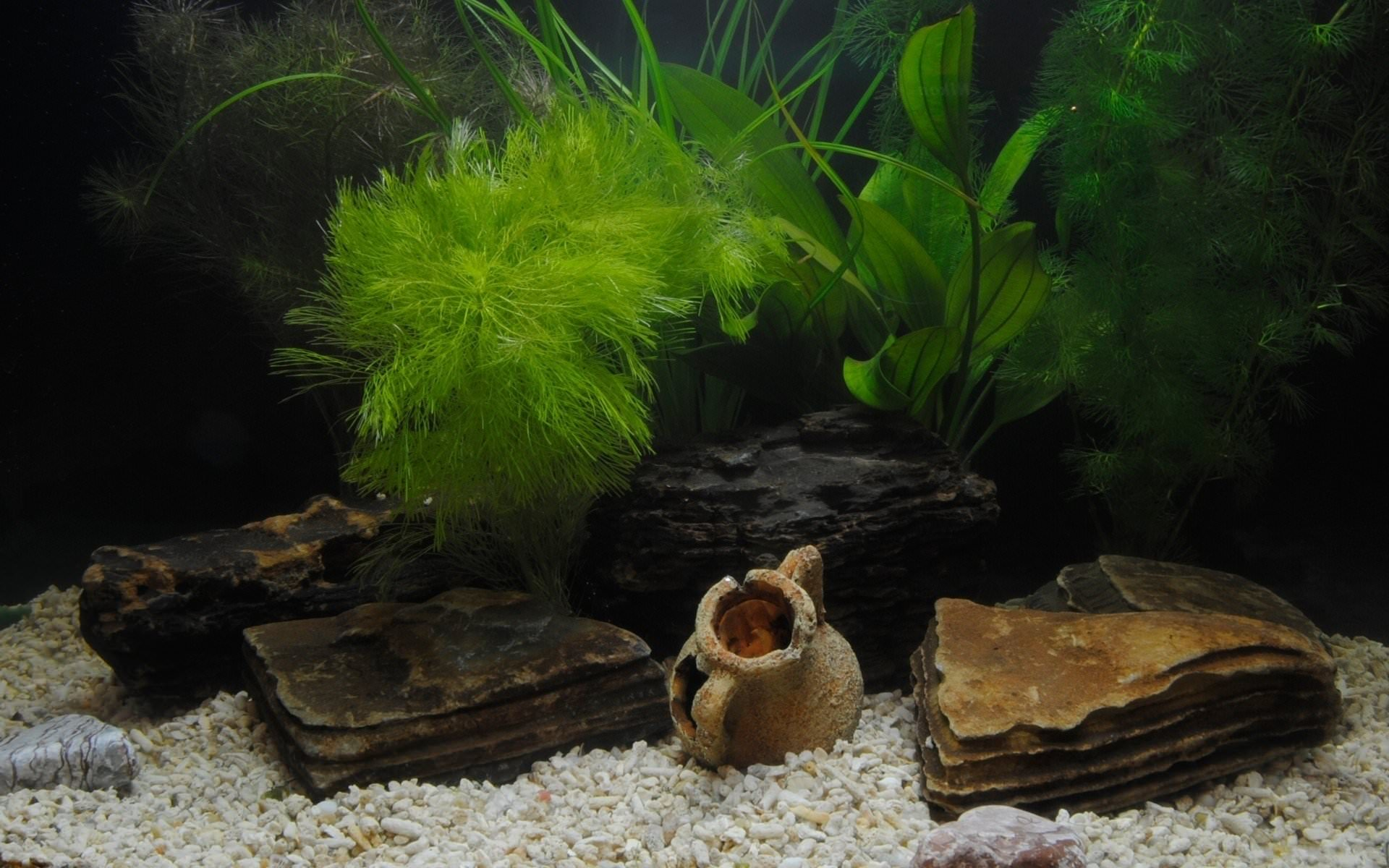 25 aquarium backgrounds wallpapers images pictures for Fish tank backdrop