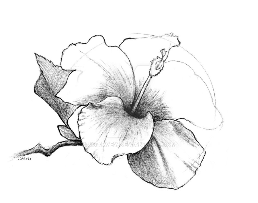 Hibiscus Flower Line Drawing : Flower drawings art ideas sketches design trends