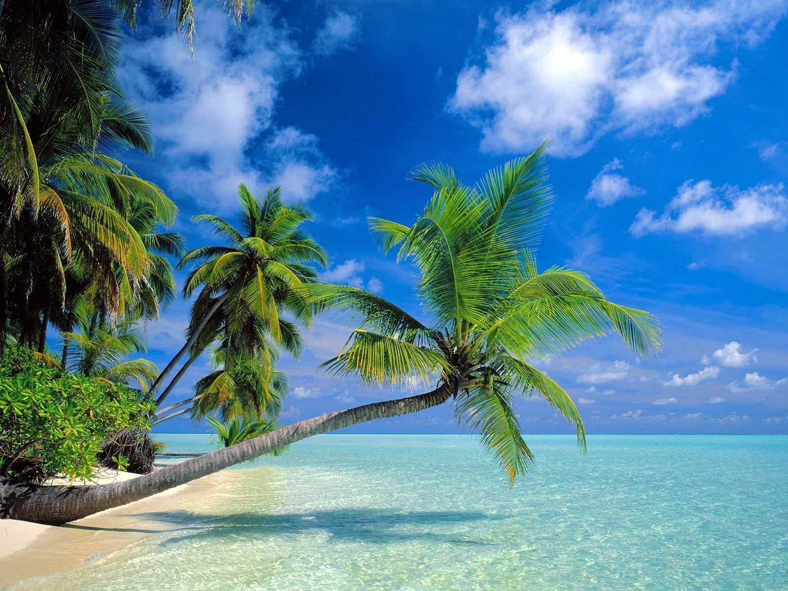awesome tropical beach wallpapers - photo #36