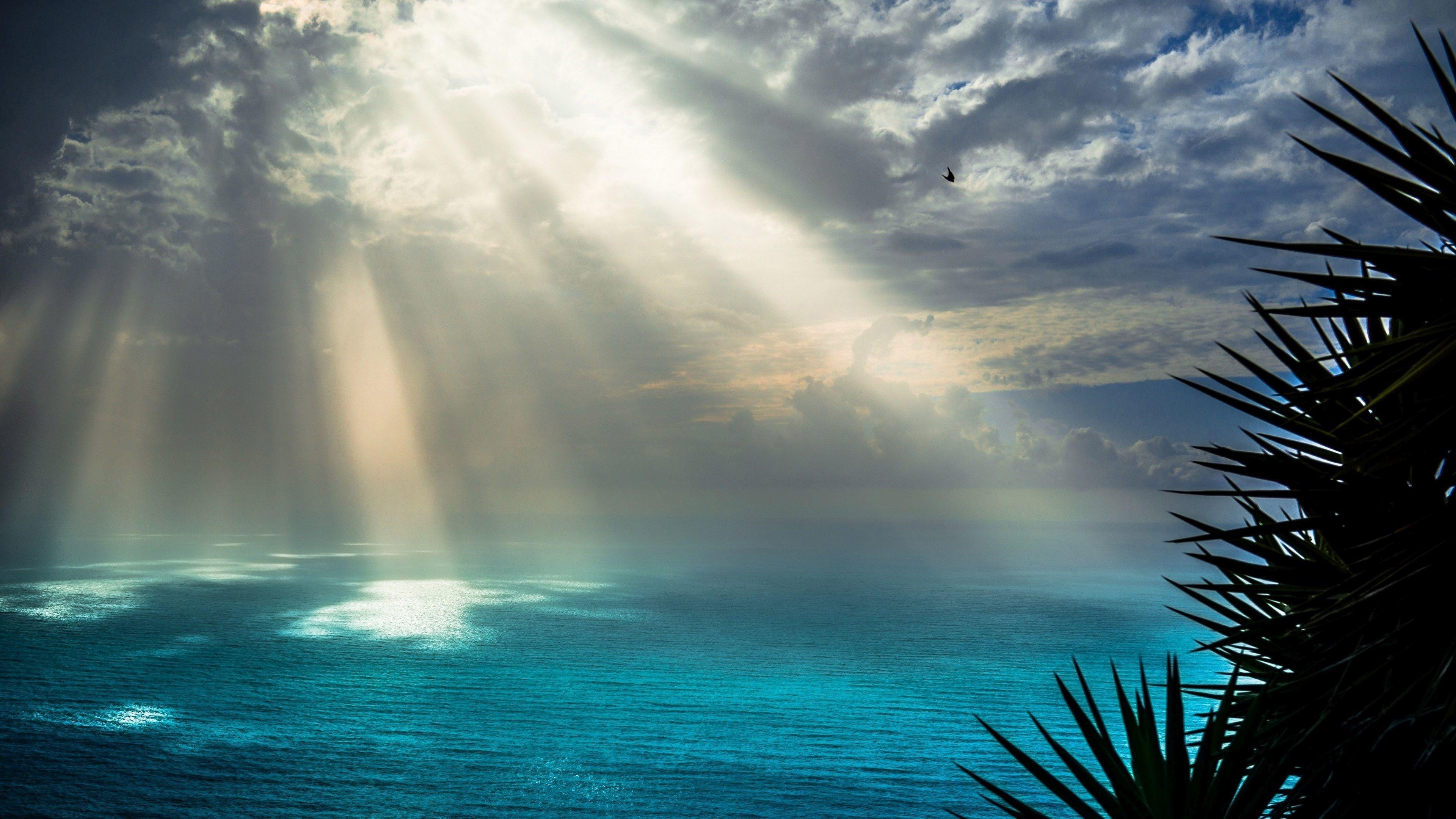 Море вода деревья облака  № 1034939 без смс
