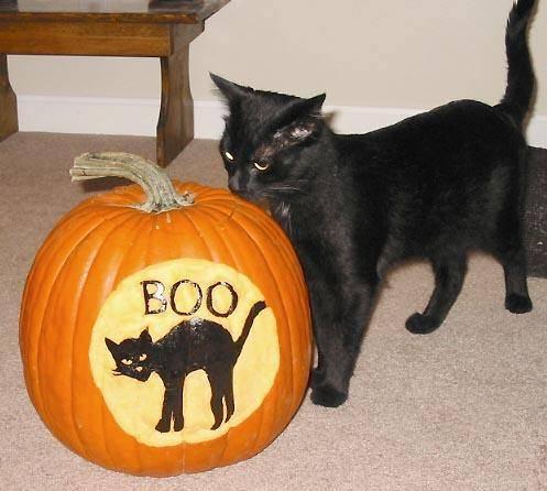 black cat silhouette pumpkin carving