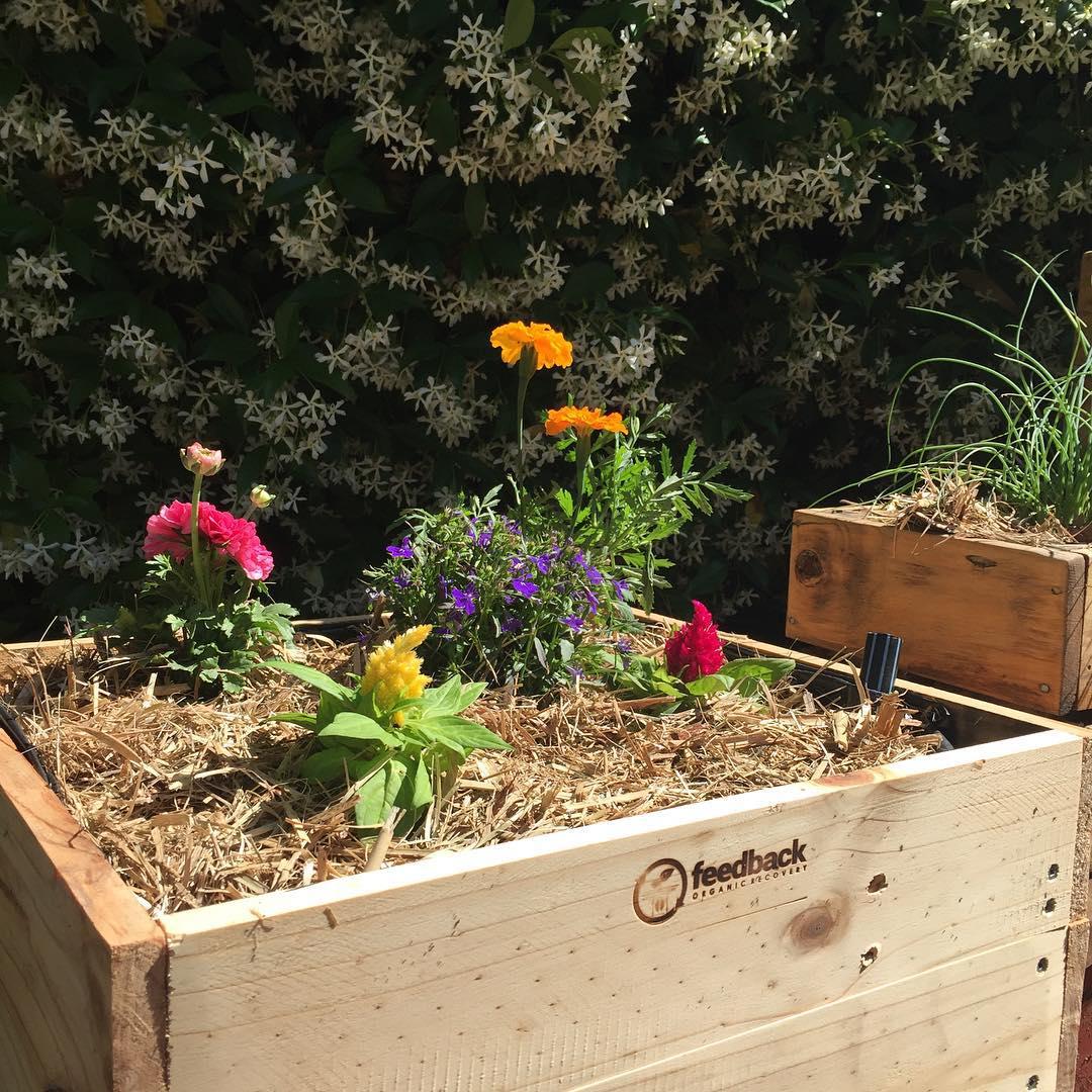 Organic Pallet Planter Design