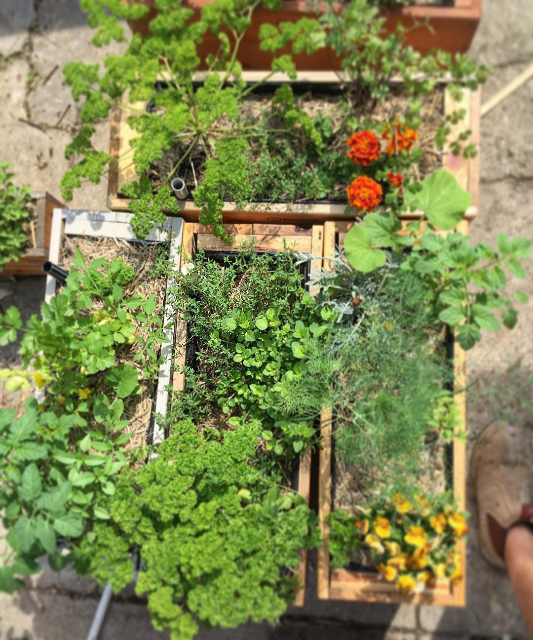 Rustic Pallet Planter Design