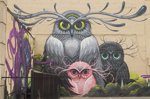 owl-graffiti-background