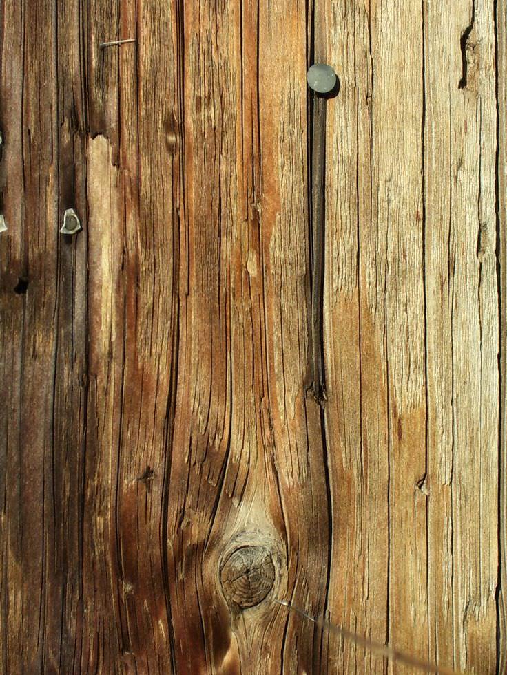 Tart Wood