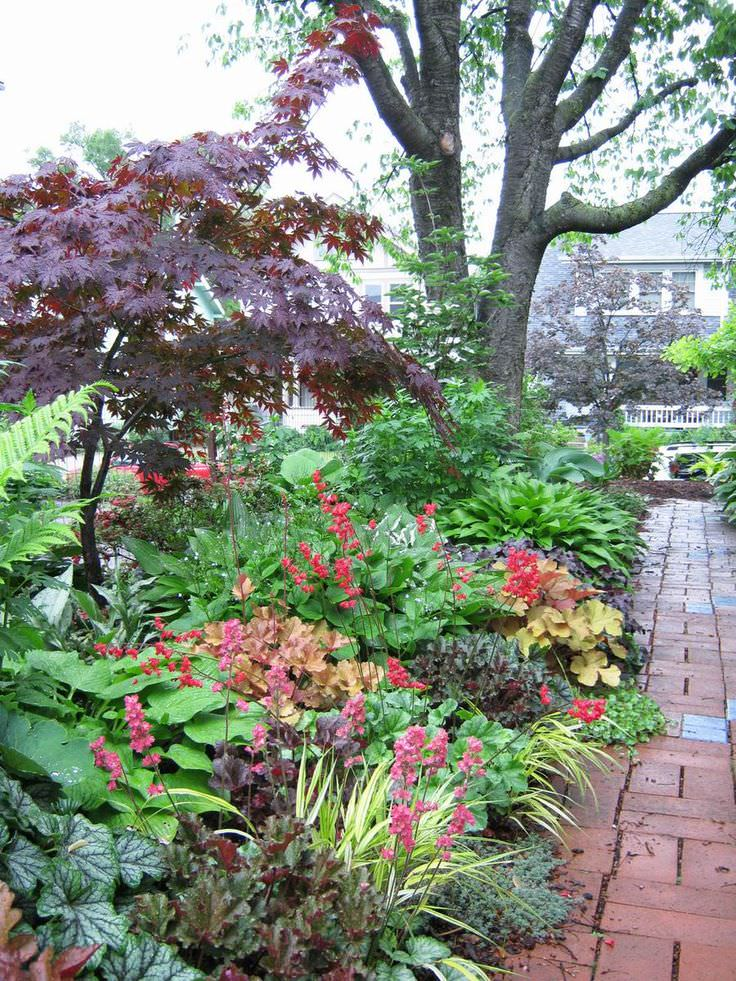 Gardens Shade Plants And Ferns Home Design Ideas And Design Ideas
