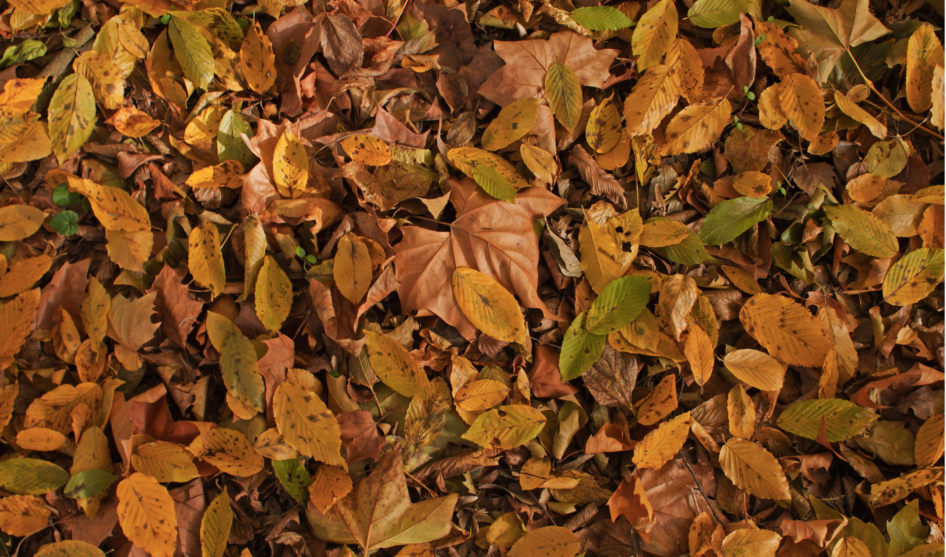 brown leaves background1