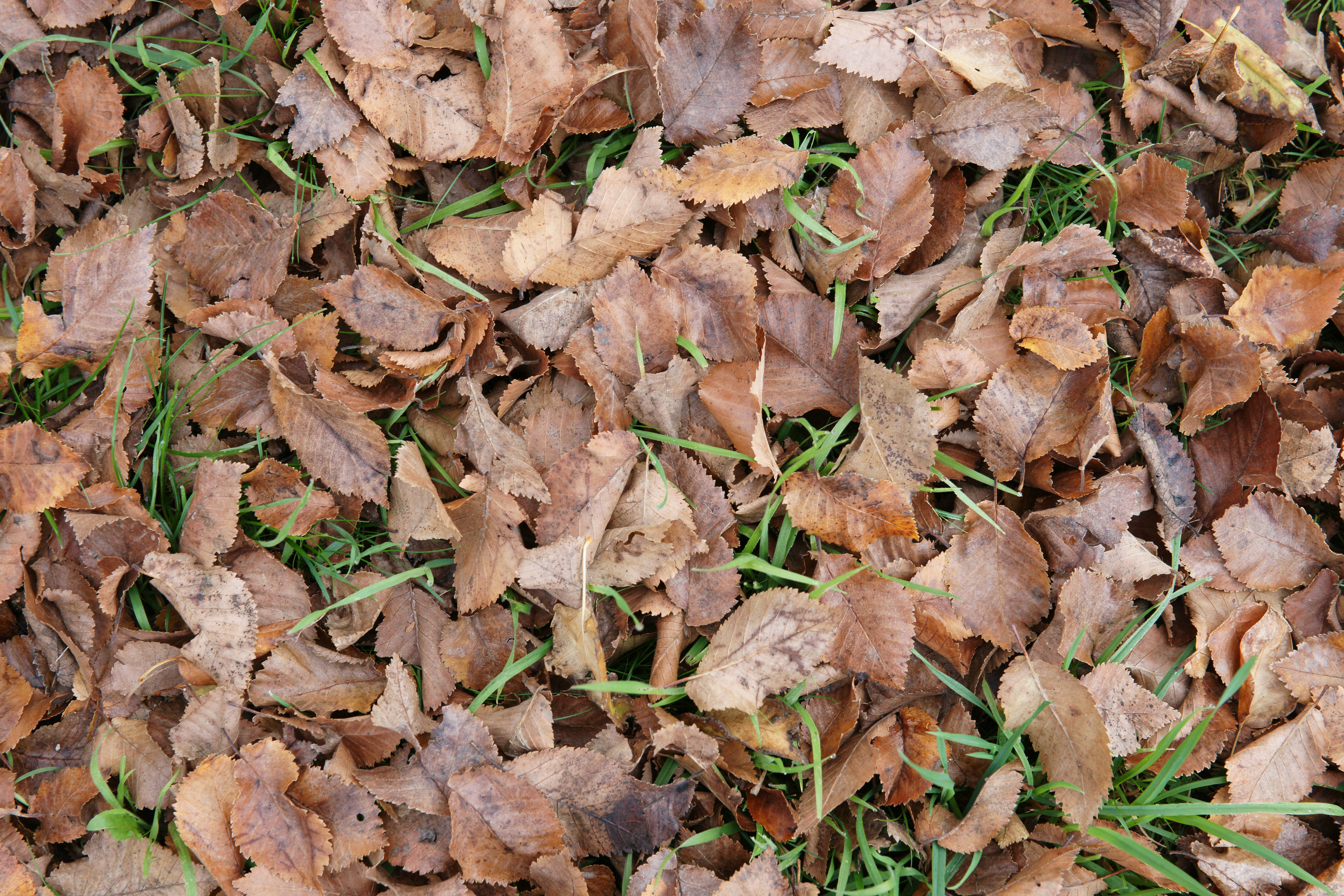 brown leaves on ground background