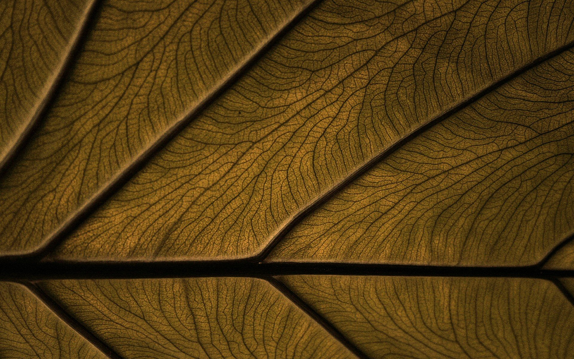 75 Brown Backgrounds Wallpapers Images Pictures  : Brown Backgrounds30 from www.designtrends.com size 1920 x 1200 jpeg 639kB