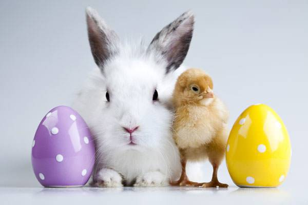 Easter,Background,Designs,Rabbit,Chicken,Eggs,Yellow