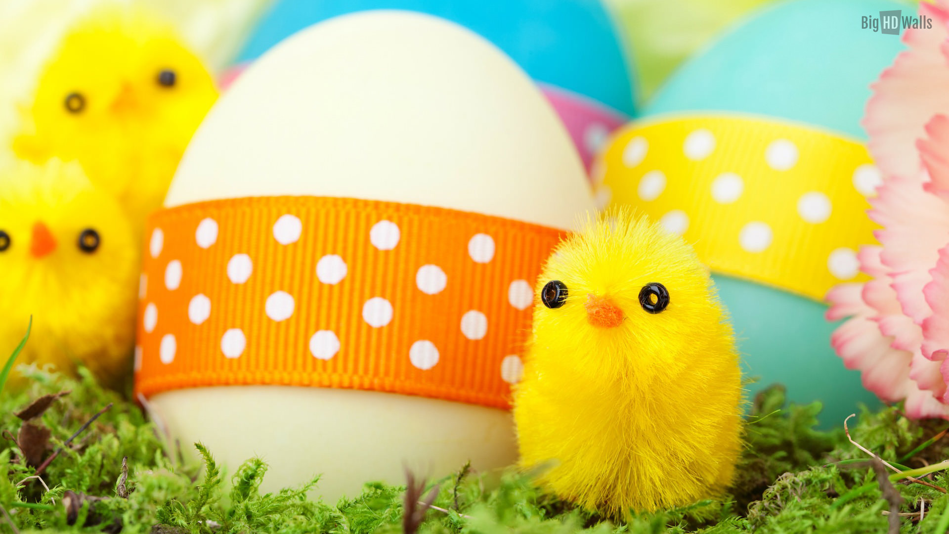 Easter,Background,Designs,Egg,Chicken,Ribbon,Flowers