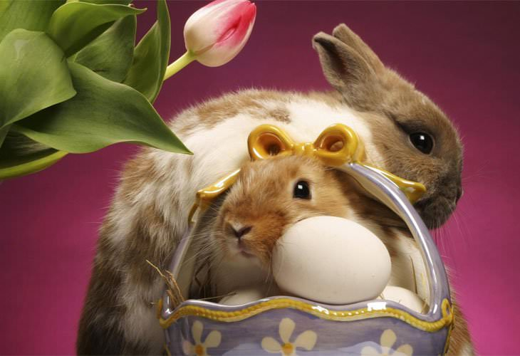 Easter Bunny,Background,Designs,Basket,Eggs,Tulip