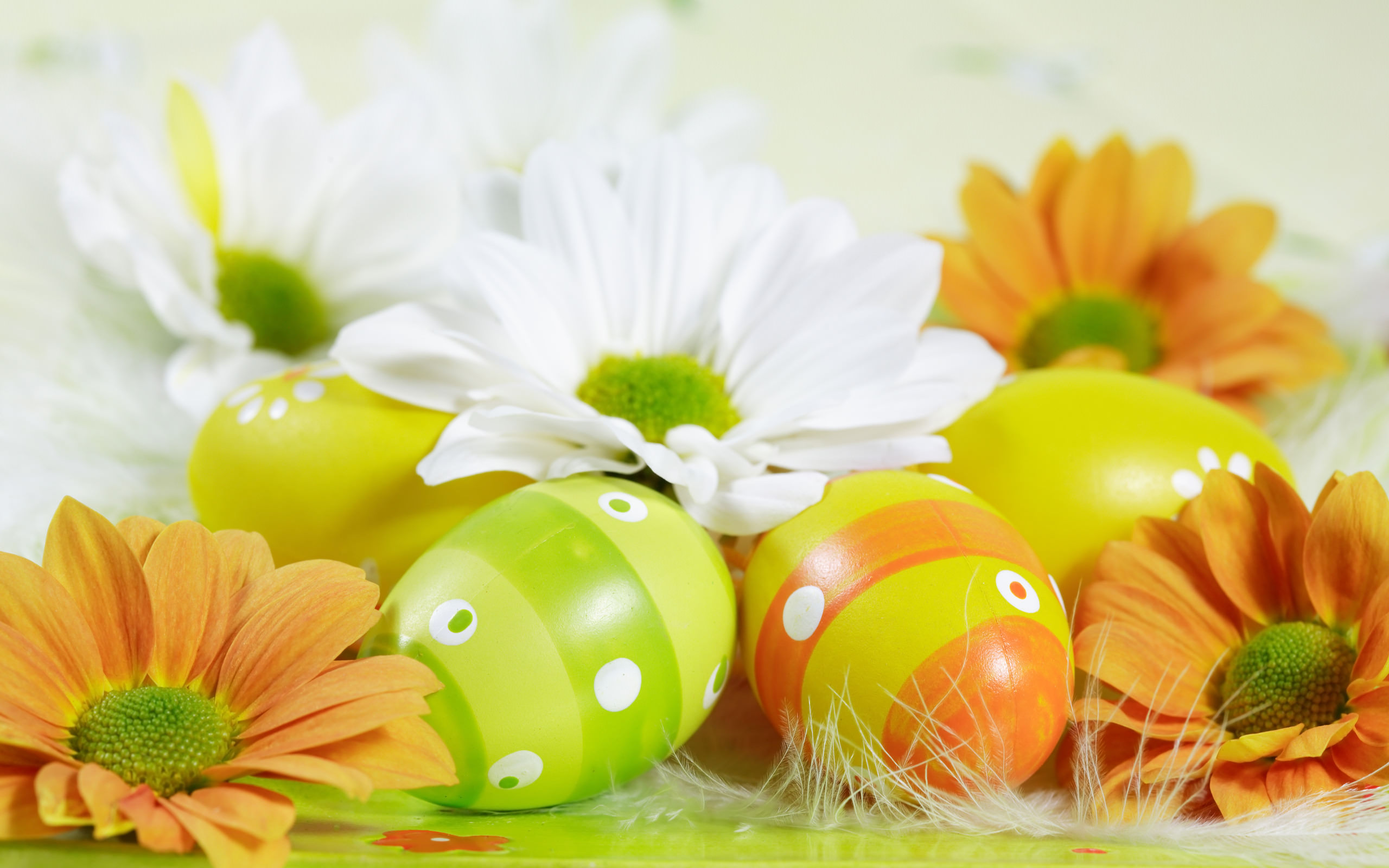 Easter,Background,Designs,Eggs,Flowers,