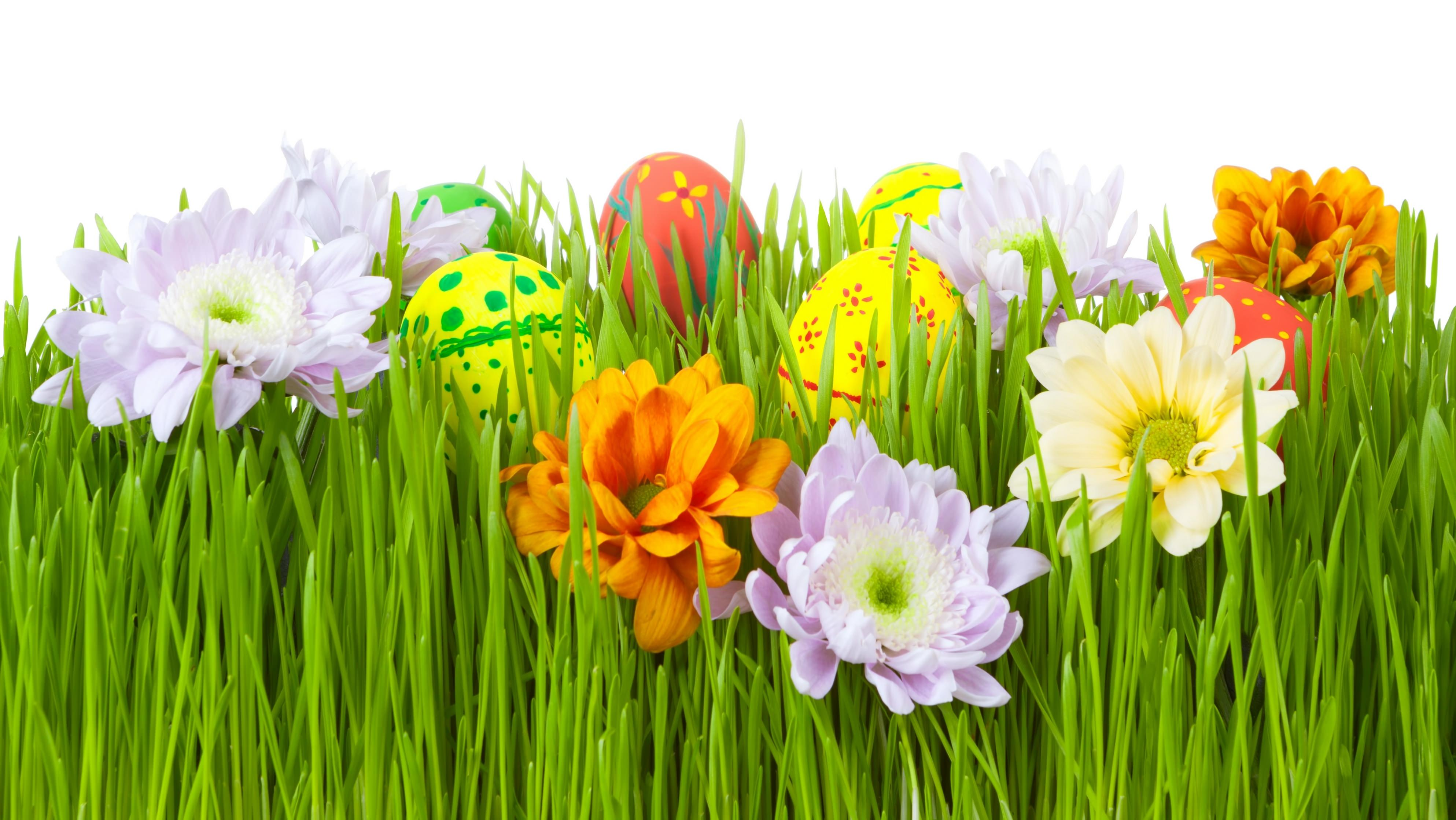 Easter,Background,Designs,Flower,Eggs