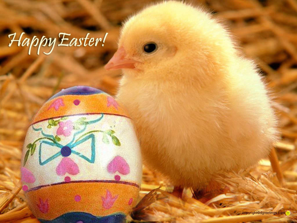 Easter,Background,Designs,Eggs,Chicken