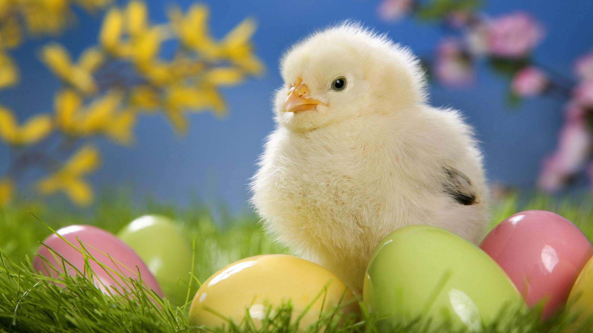 easter background designs28