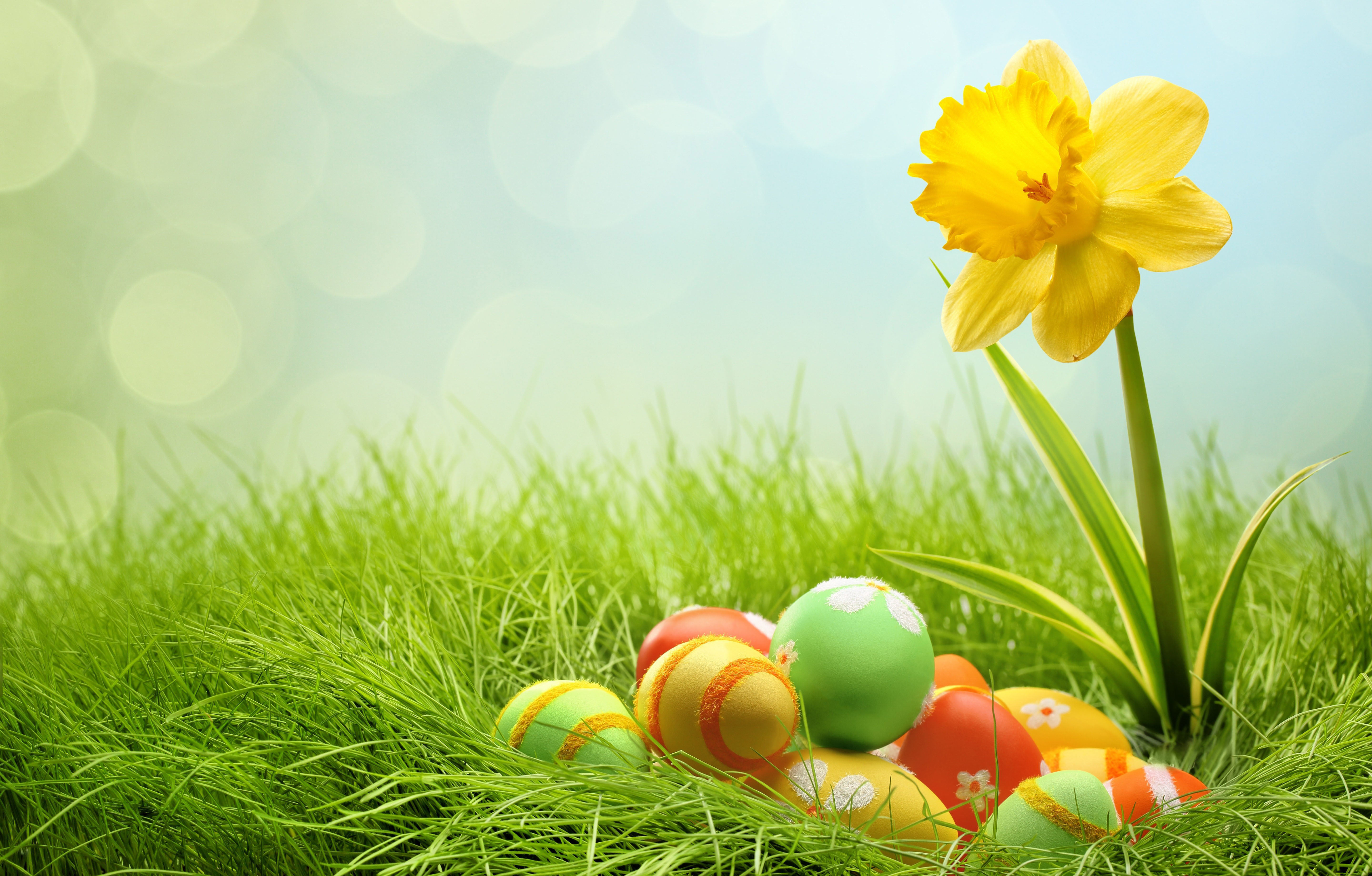 Easter,Background,Designs,Eggs,Flowers