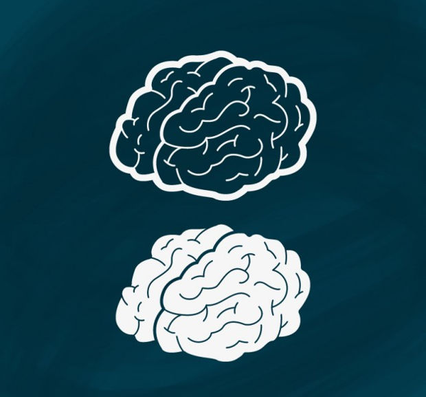 Hand Drawn Brain Vector