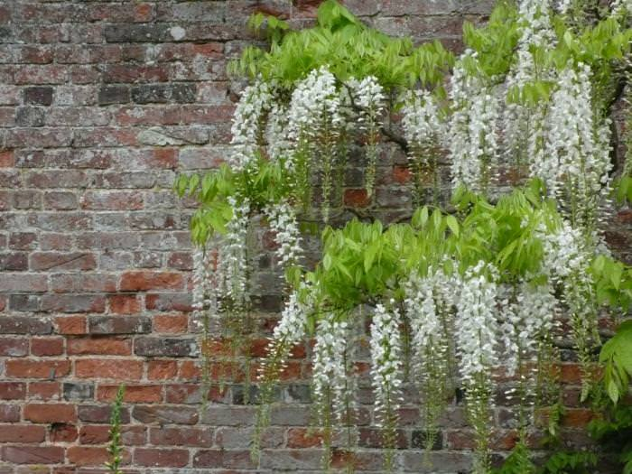 Elegantly Brick Wall Garden Design