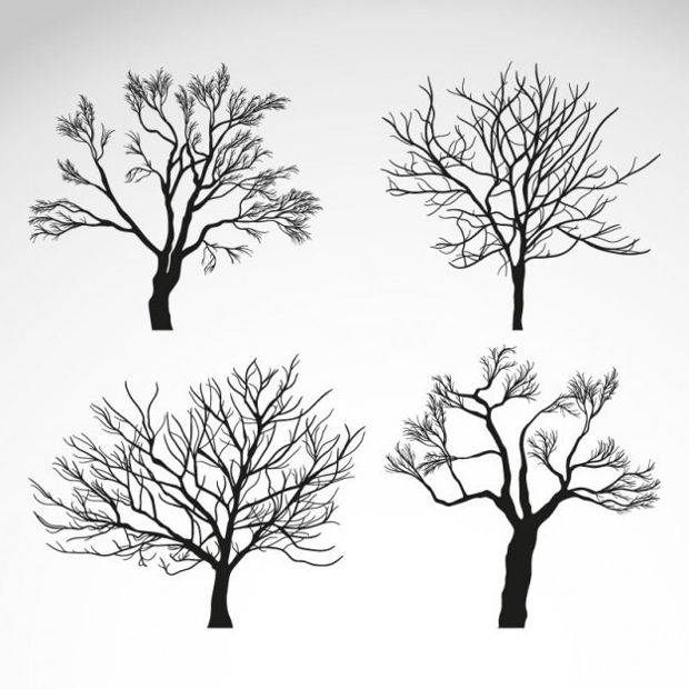 Winter Trees Silhouette