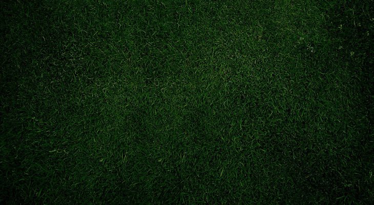 plain green grass background1