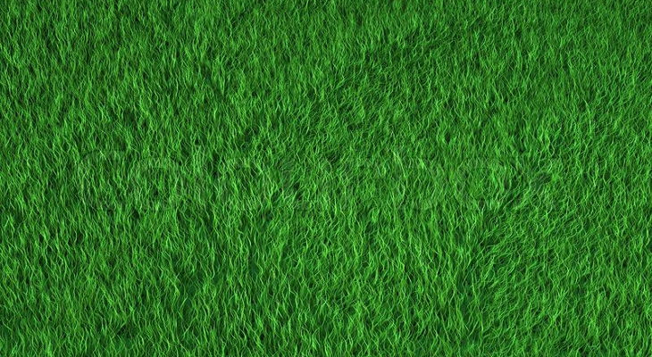 green grass background1