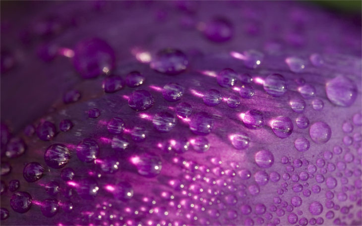 purple-bubbles