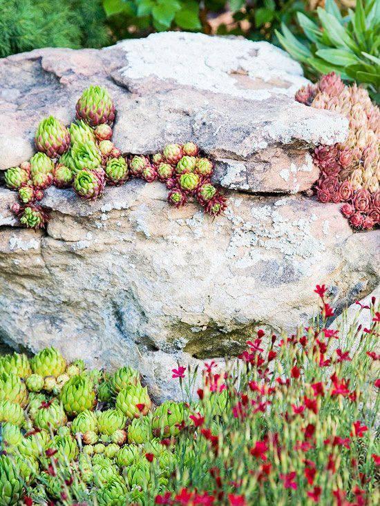 Attractive Rock Garden