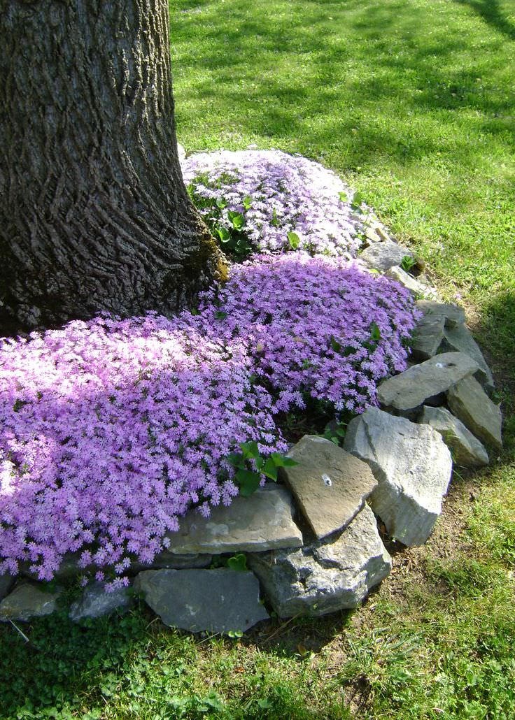 Rock Landscaping Under Trees : Rock garden designs design trends premium psd