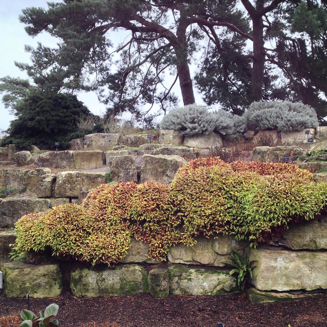 rock garden designs11