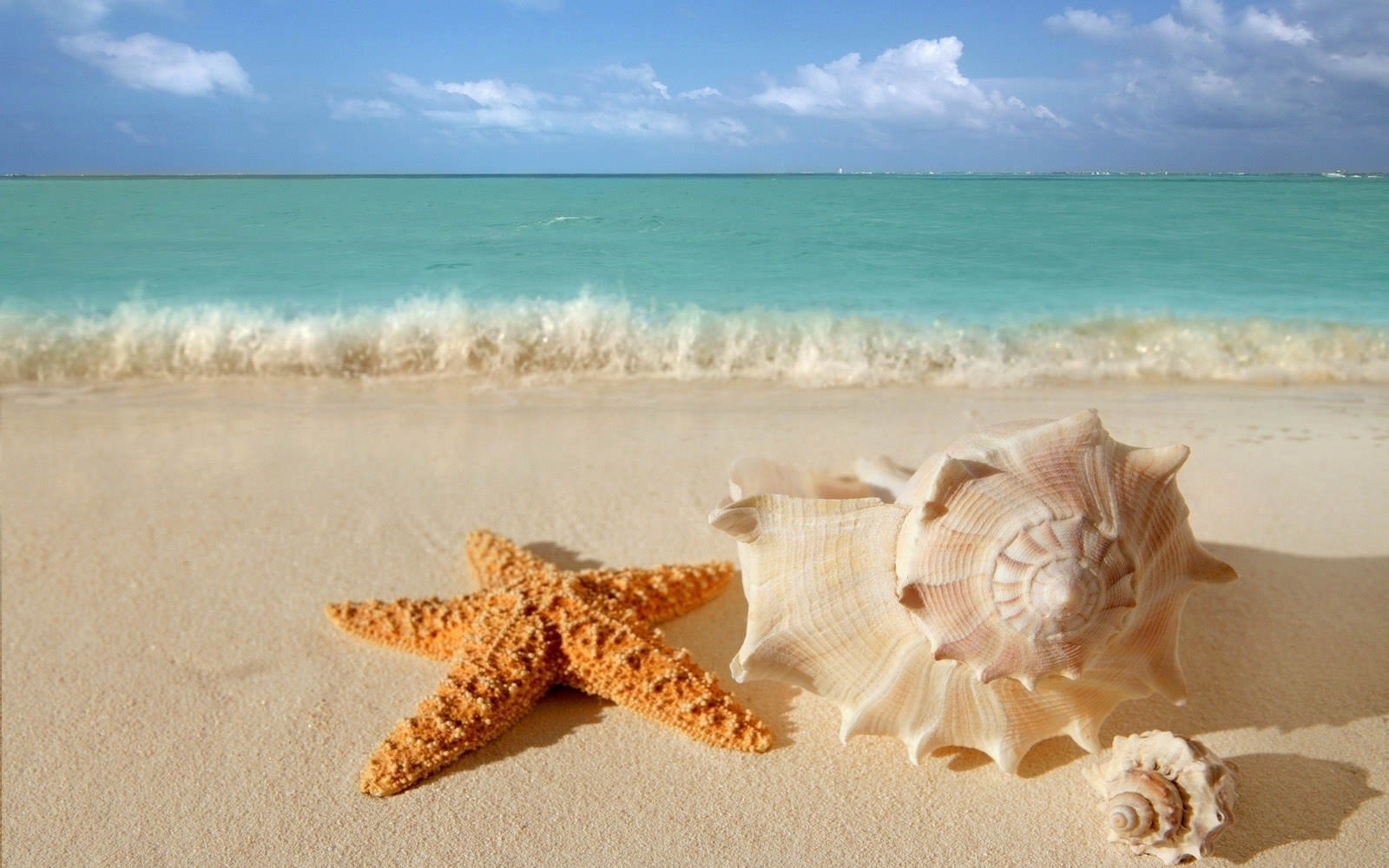 Sea Shell and Star Fish Background