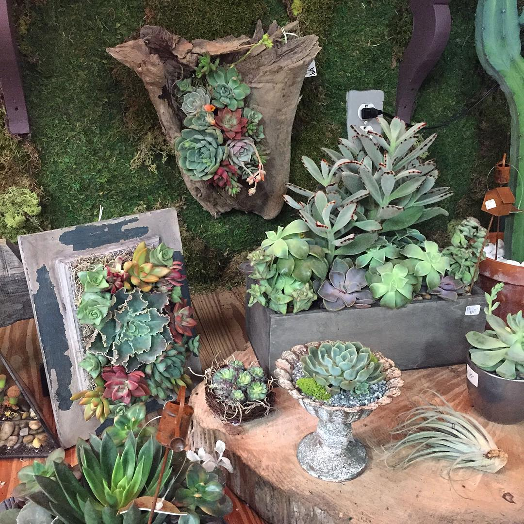 Incroyable Cool Succulent Garden