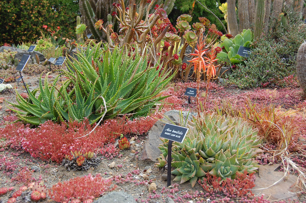 mendocino succulent garden
