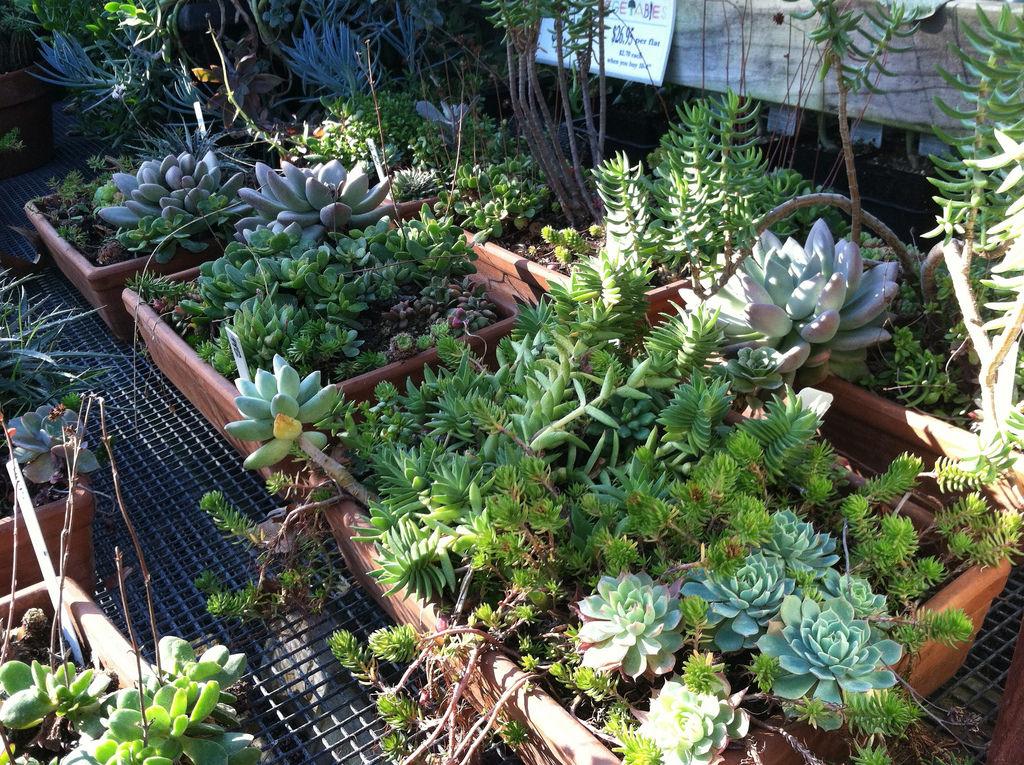 Outdoor Succulent Gardening