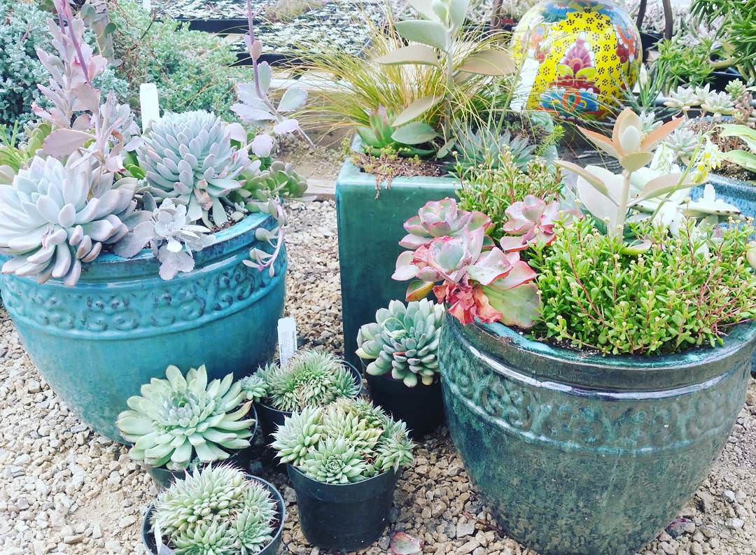 2697595122 also Succulent Garden Designs additionally CGVyZW5uaWFsIGdhcmRlbiBwbGFucyB6b25lIDQ as well Succulent Ideas besides singinggardens. on succulent landscaping ideas