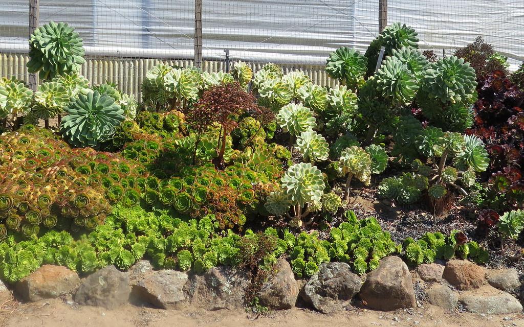 simple succulent garden