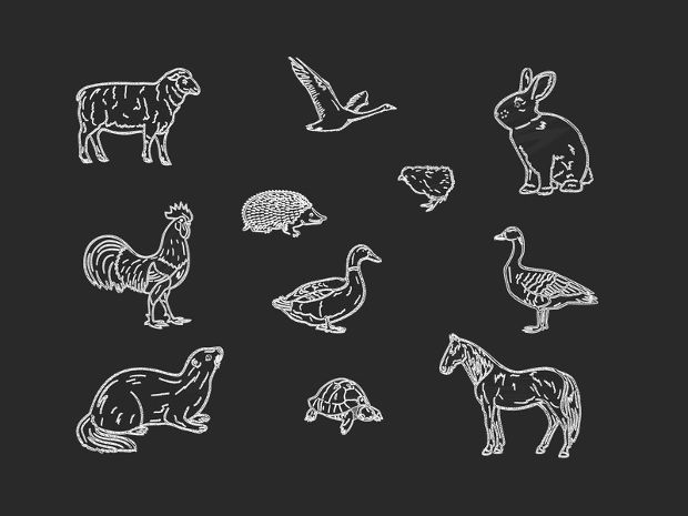 Chalk Drawn Animal Set Vector