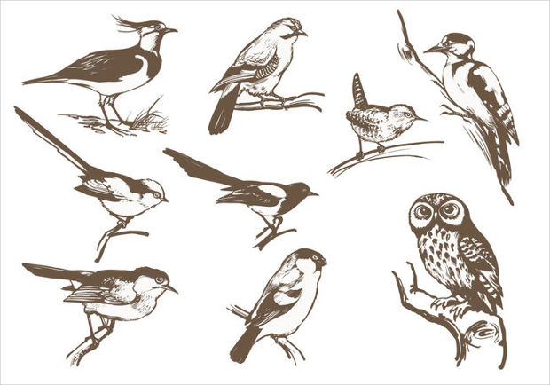 Etched Bird Vector