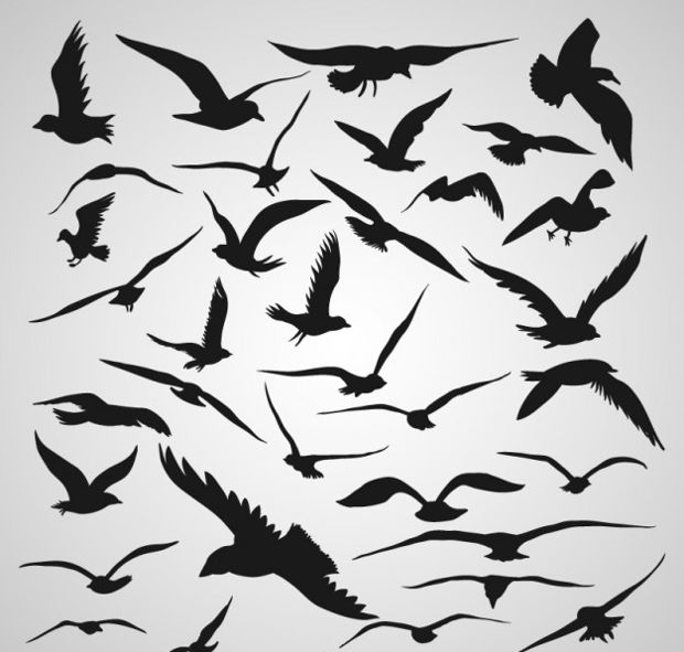 flying birds vector