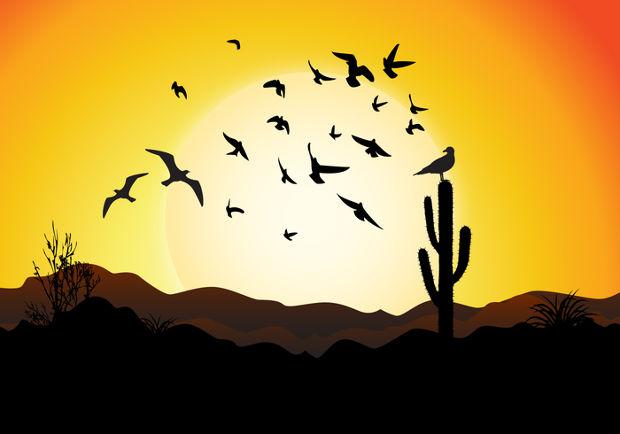 Flying Bird Sunset Vector