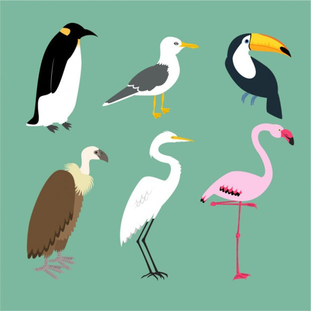 variety of birds vector