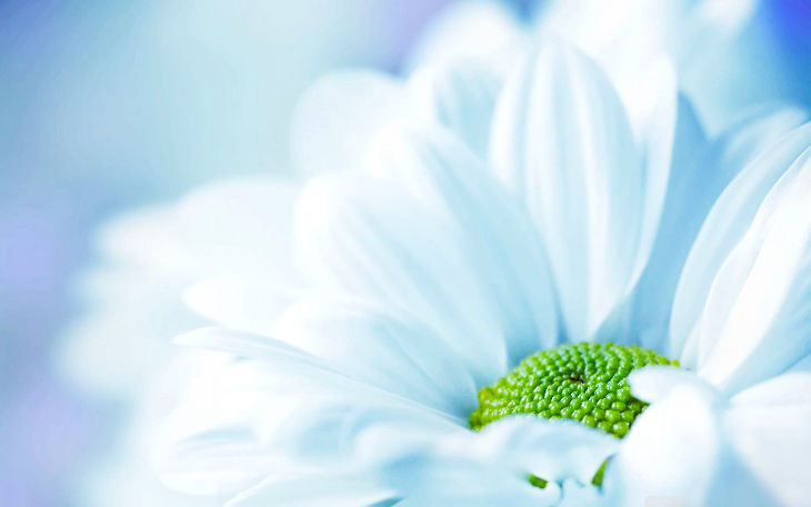 White Flower Pastel Background
