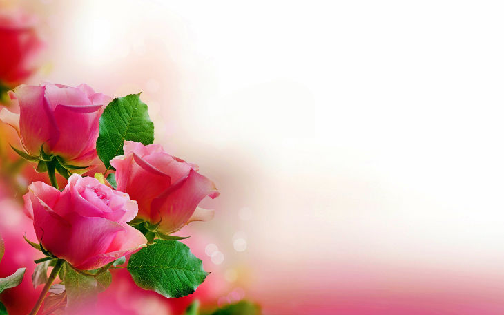 pink roses pastel background