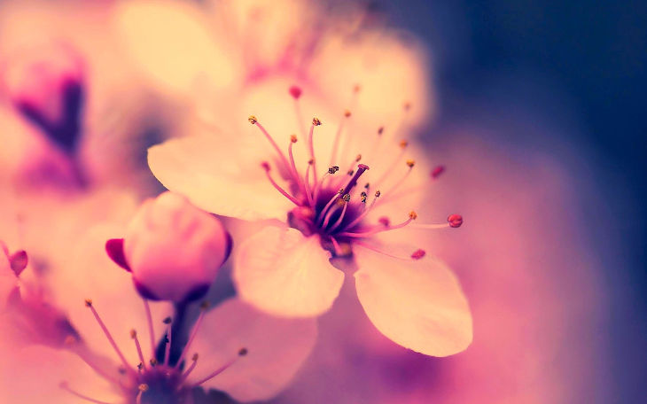 pastel blossom background